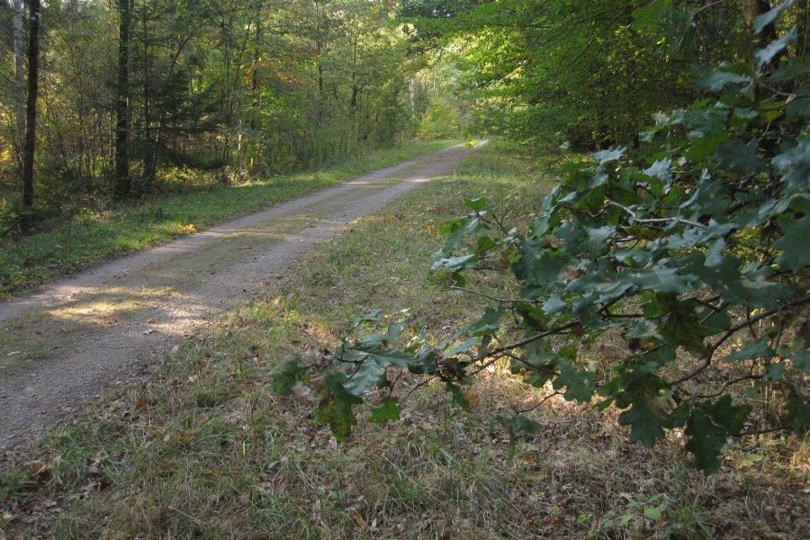 Bestimmungshilfe des lepiforums ectoedemia subbimaculella Habitat deutschland