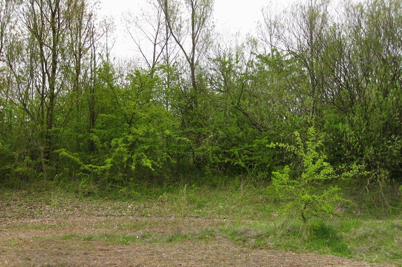Bestimmungshilfe des lepiforums recurvaria leucatella for Catalogue habitat 2017